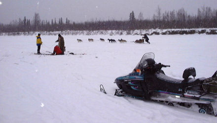 The Chena River accommodates many users, trappers and mushers alike - click here
